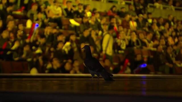 Una paloma robó el protagonismo de un partido de los playoffs de la LCS NA
