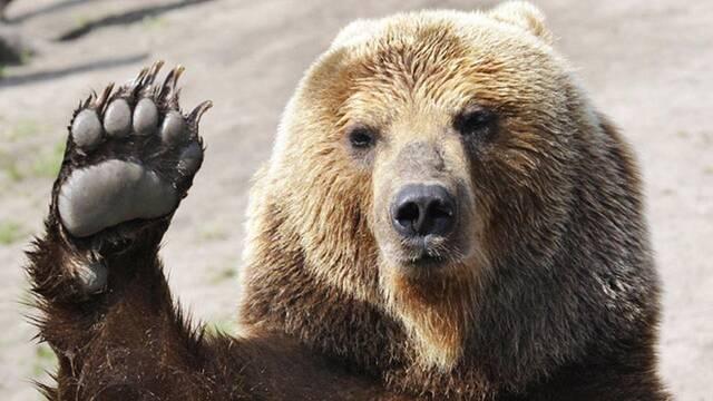 Un oso roba un coche, lo destroza y se da a la fuga en Estados Unidos