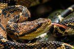 Así es el experimento del hombre que se encerró 72 horas con 72 serpientes venenosas