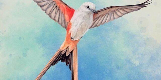 Así es el curioso juego de mesa 'Wingspan', para los amantes de las aves