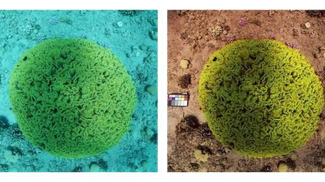 Un algoritmo elimina el agua de las fotografías submarinas