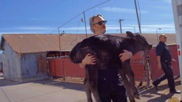 Joaquin Phoenix rescata a una vaca y su ternero en un matadero