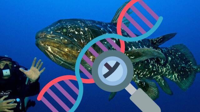 El celacanto: Los expertos creen que no es el fósil viviente que se pensaba