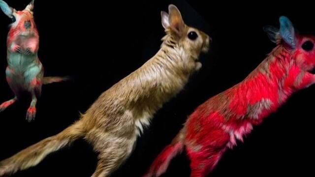 La liebre saltadora, un animal cuyo pelaje brilla en la oscuridad
