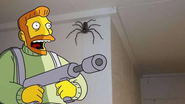 Un australiano convive con una araña gigante durante un año y explica sus motivos