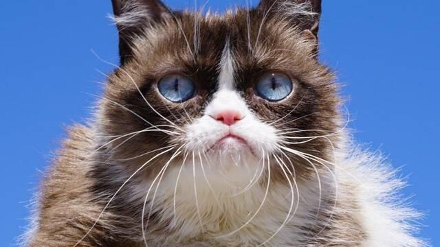 Fallece la mediática felina Grumpy Cat