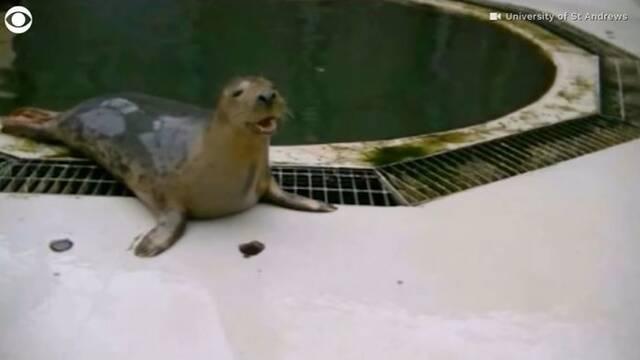 Estas focas tararean el tema principal de Star Wars y lo hacen mejor que yo