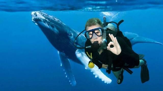 Un buzo relata su experiencia tras ser engullido por una ballena