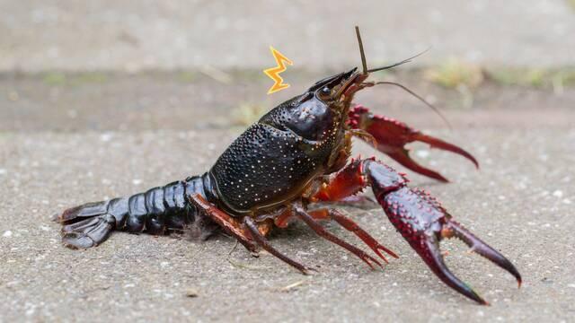 Los antidepresivos hacen que los cangrejos se vuelvan más valientes