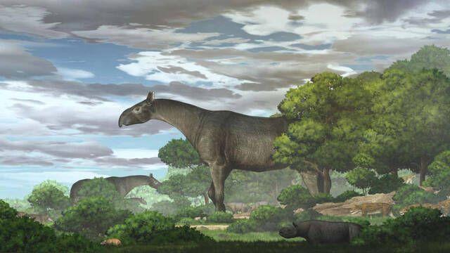 Descubierto el fósil de un rinoceronte de 5 metros de altura y 24 toneladas