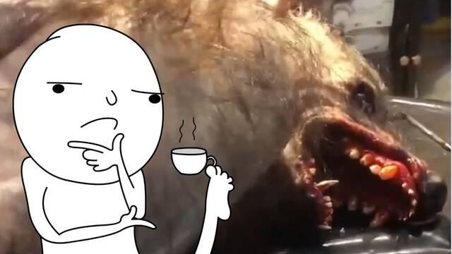 ¿Es este hombre lobo real? Explicamos el vídeo que ha revolucionado las redes sociales