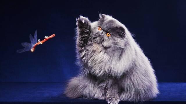 ¿Por qué los gatos abofetean cosas?