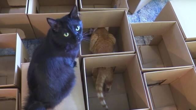 ¿A tu gato le gustan las cajas? No te pierdas este laberinto hecho con 50