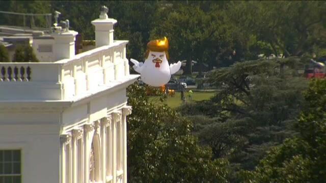 Un pollo gigante con forma de Trump protesta junto a la Casa Blanca
