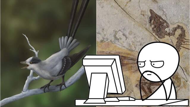 Este impresionante fósil muestra un ave con dos extrañas plumas en la cola