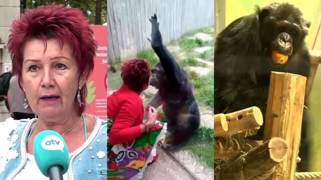 Un zoo prohíbe la relación entre una mujer y un chimpancé por el bien del animal