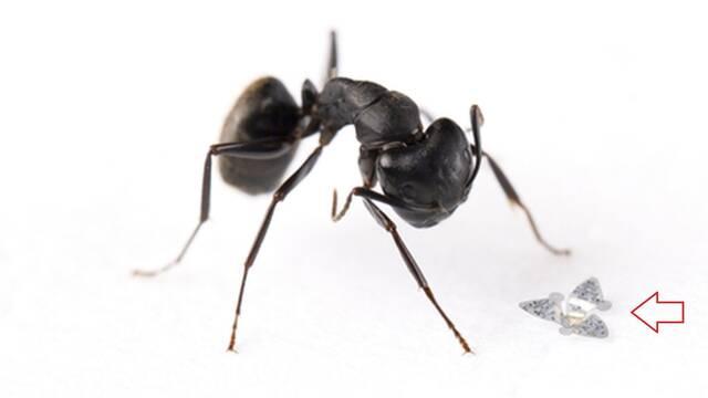 Estos microchips son el objeto volador más pequeño creado por el ser humano