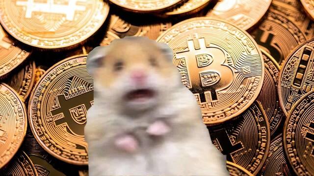 Este hámster ha aprendido a invertir en bitcoin y lo hace mejor que los expertos